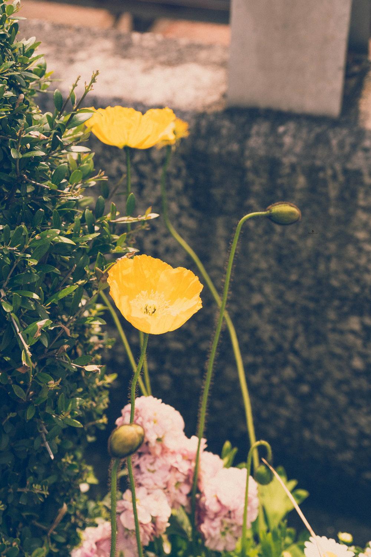 Flowers on the street in Kobe