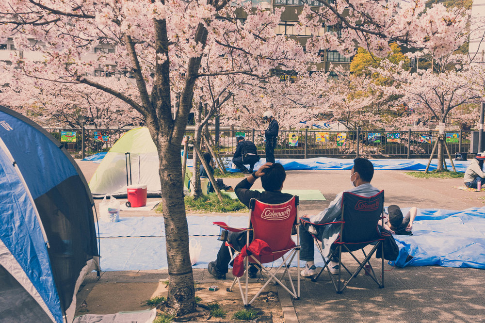 Kobe, cherry blossom viewing