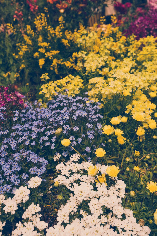 Flowers in Nunobiki Herb Garden, Kobe