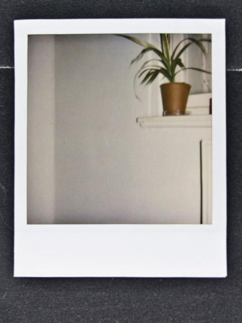 Polaroid Greens