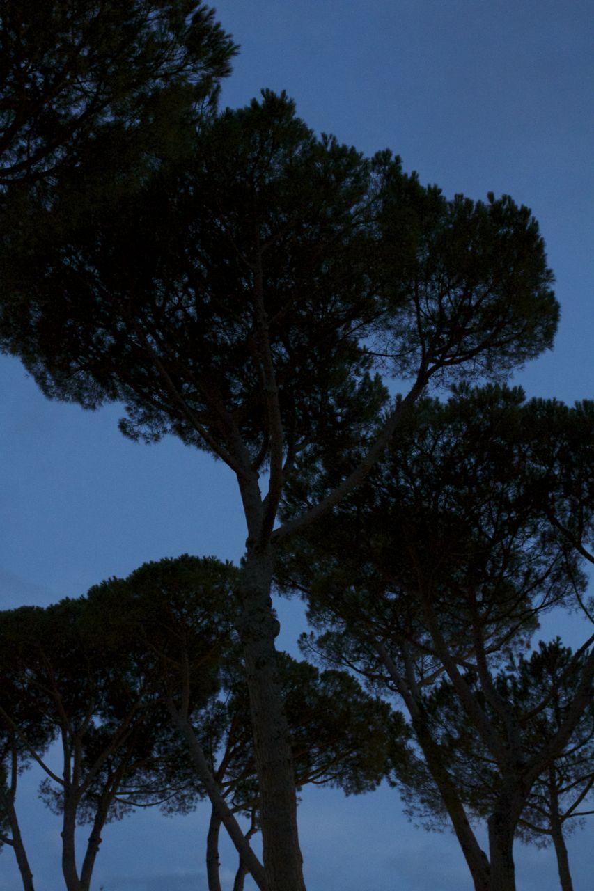 Florence43.jpg