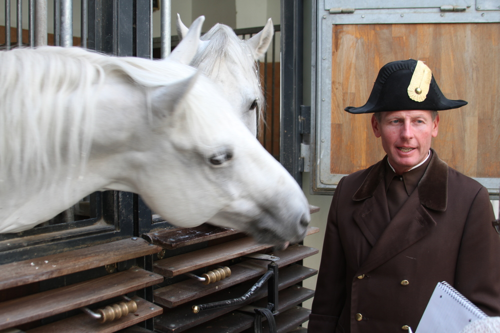 Lipinzzan rider with his horses at the Spanish Riding School of Vienna