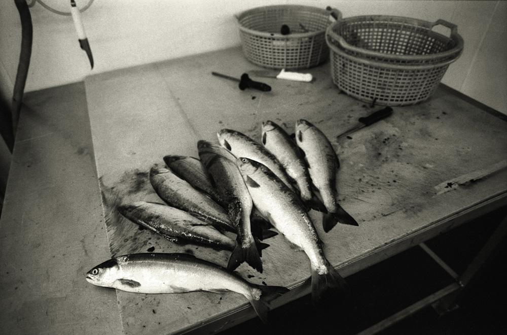 fishfactory03.jpg