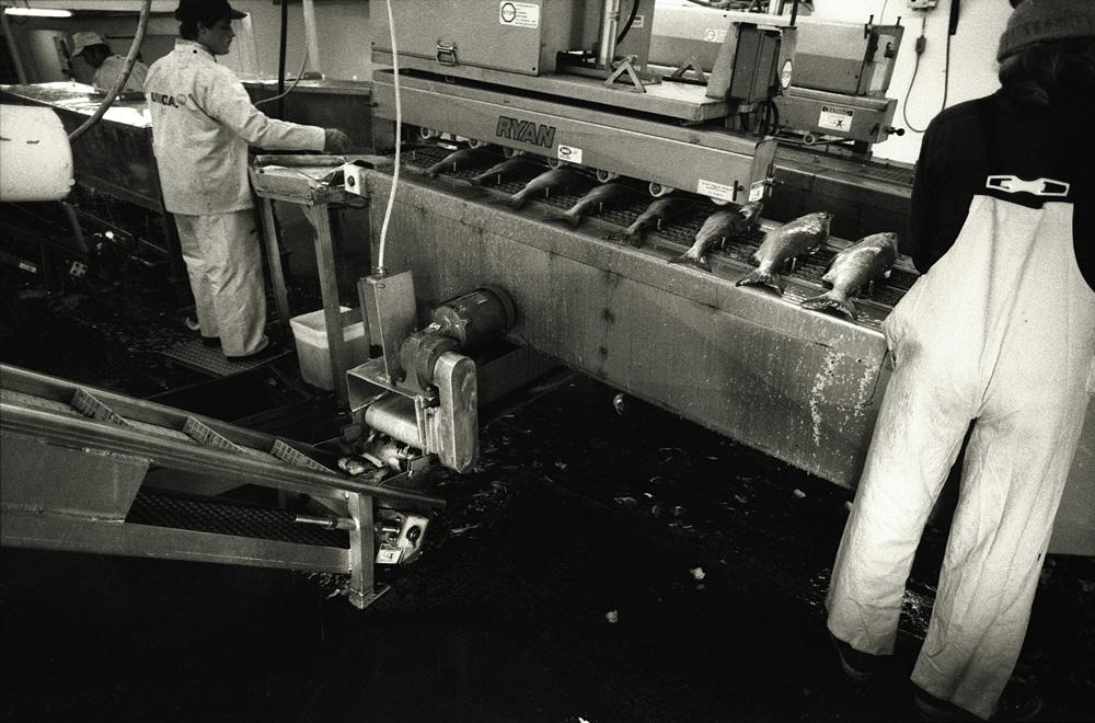fishfactory04.jpg