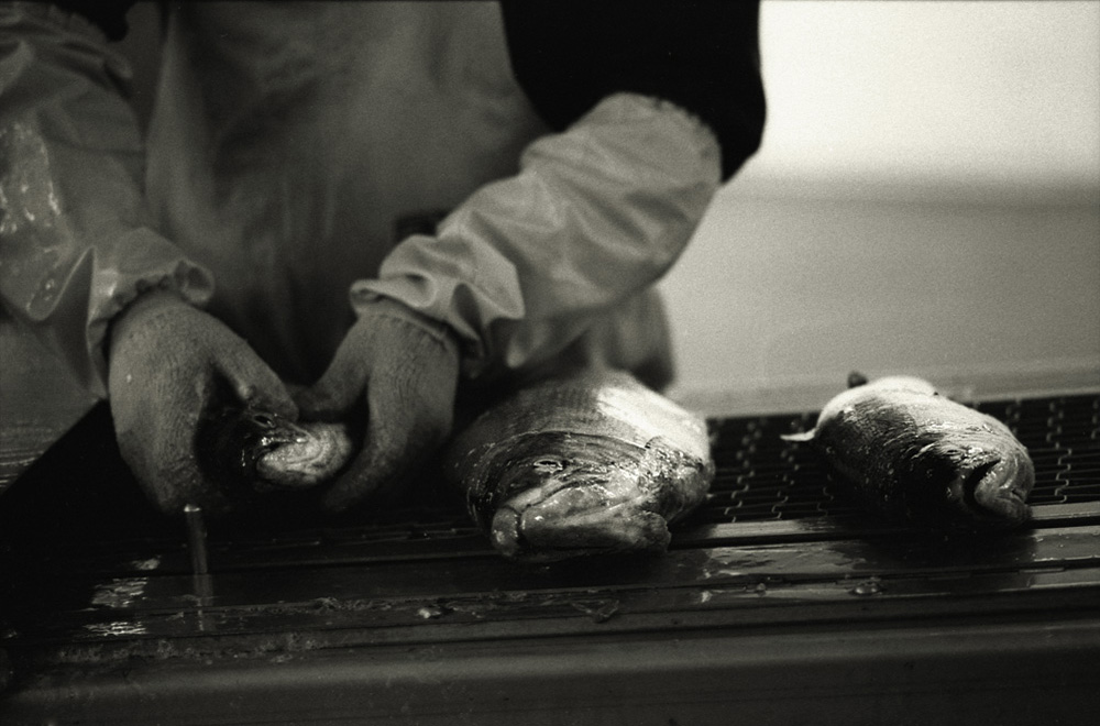 fishfactory05.jpg