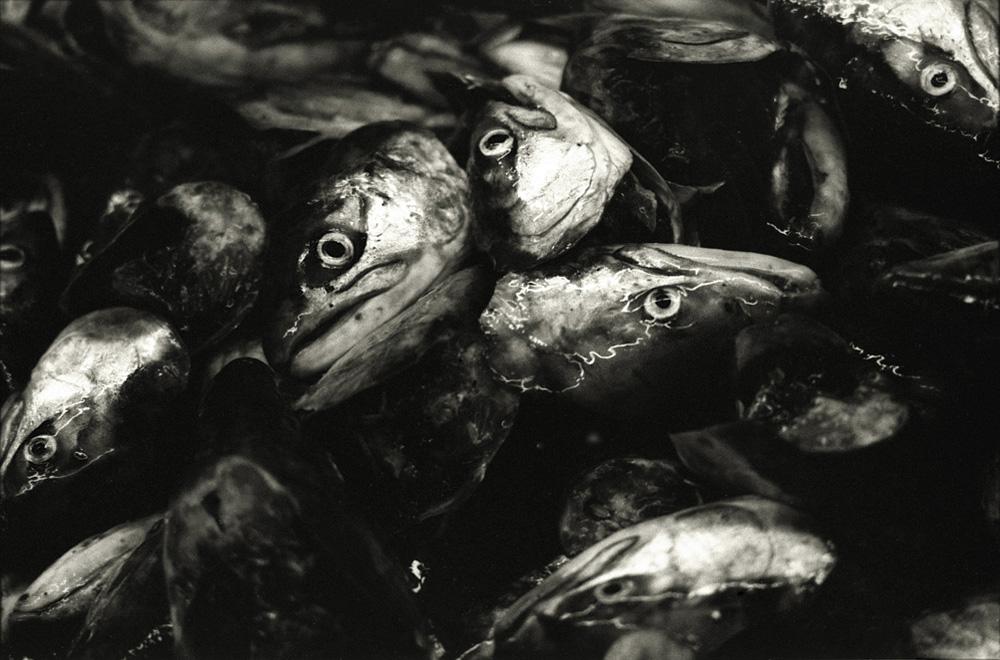 fishfactory08.jpg