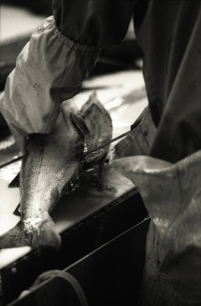 fishfactory09.jpg