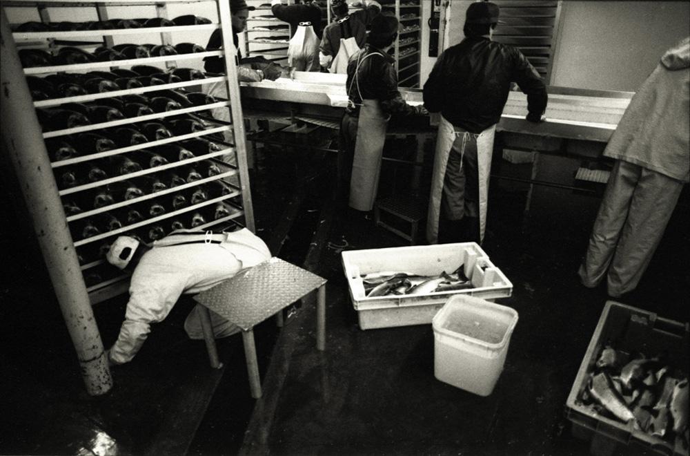 fishfactory10.jpg