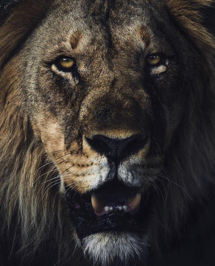 African-Wildlife-Photography-Naude-Heunis-Artists-Legends-1.jpg