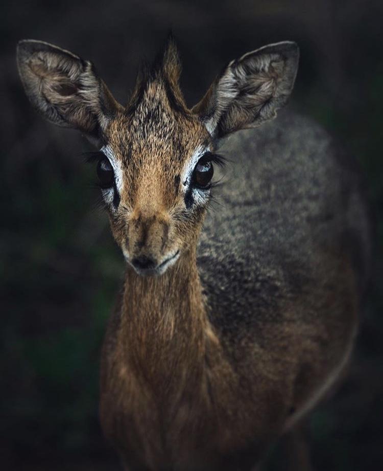 African-Wildlife-Photography-Naude-Heunis-Artists-Legends-2.jpg