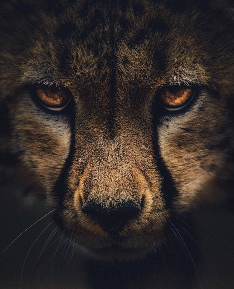 Wildlife-Photography-Naude-Heunis-Artists-Legends.jpg