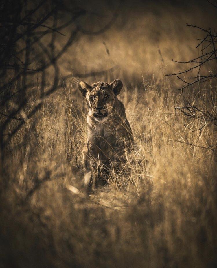 Wildlife-Photography-Naude-Heunis-Artists-Legends_06.jpg