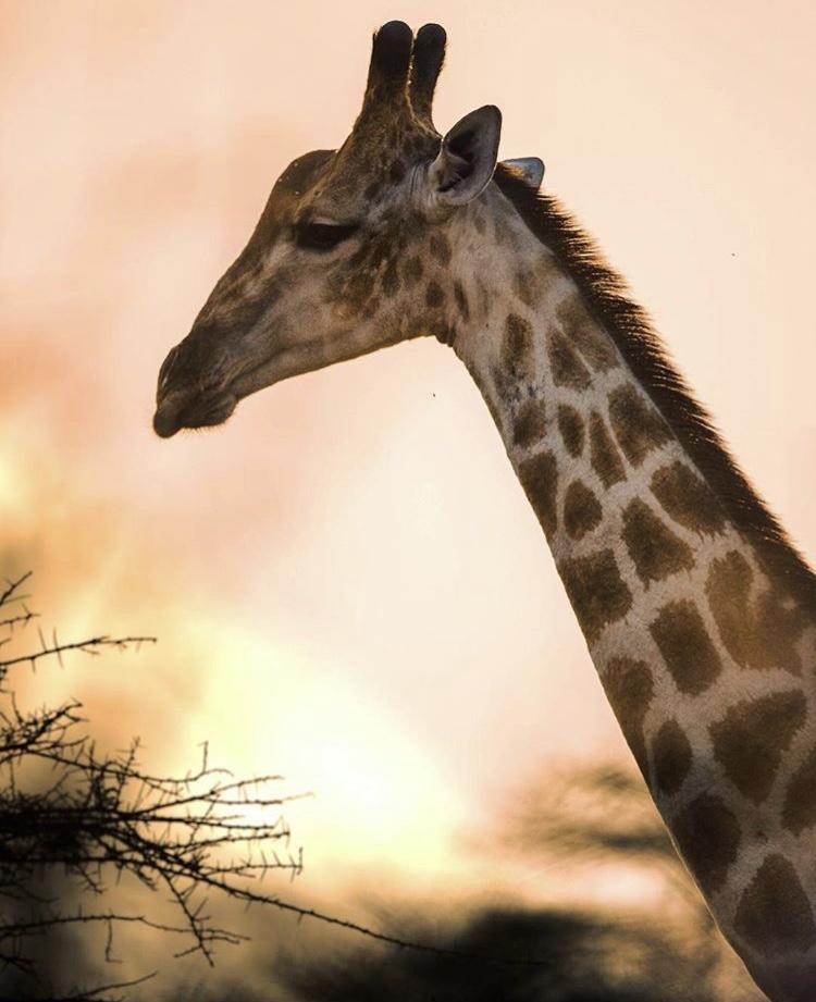 Wildlife-Photography-Naude-Heunis-Artists-Legends_17.jpg