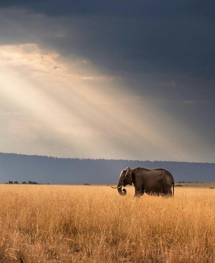 Wildlife-Photography-Naude-Heunis-Artists-Legends_22.jpg
