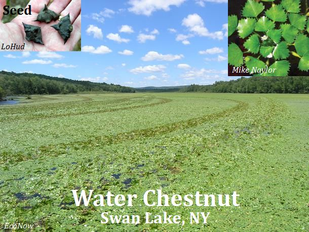 W.Chestnut_SwanLake-NY_EcoNow_web.jpg