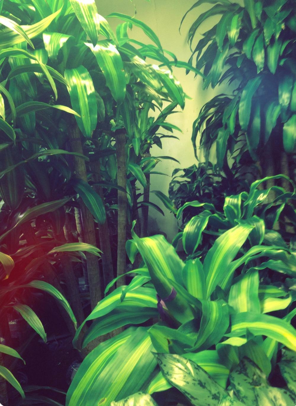 Leafyleafs.jpg