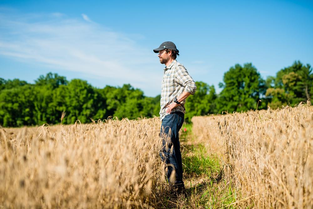 Barley Field Troegs Chris