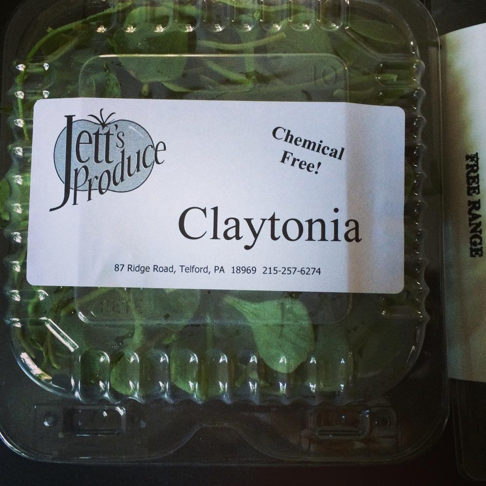 claytonia