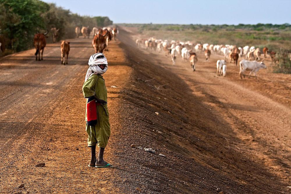 Peul nomad in the national park of Djoudj. Senegal