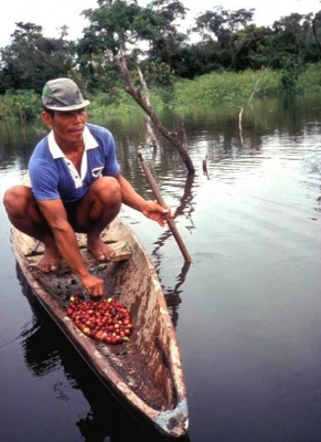 Fun fact: Camu Camu is harvested via canoe!
