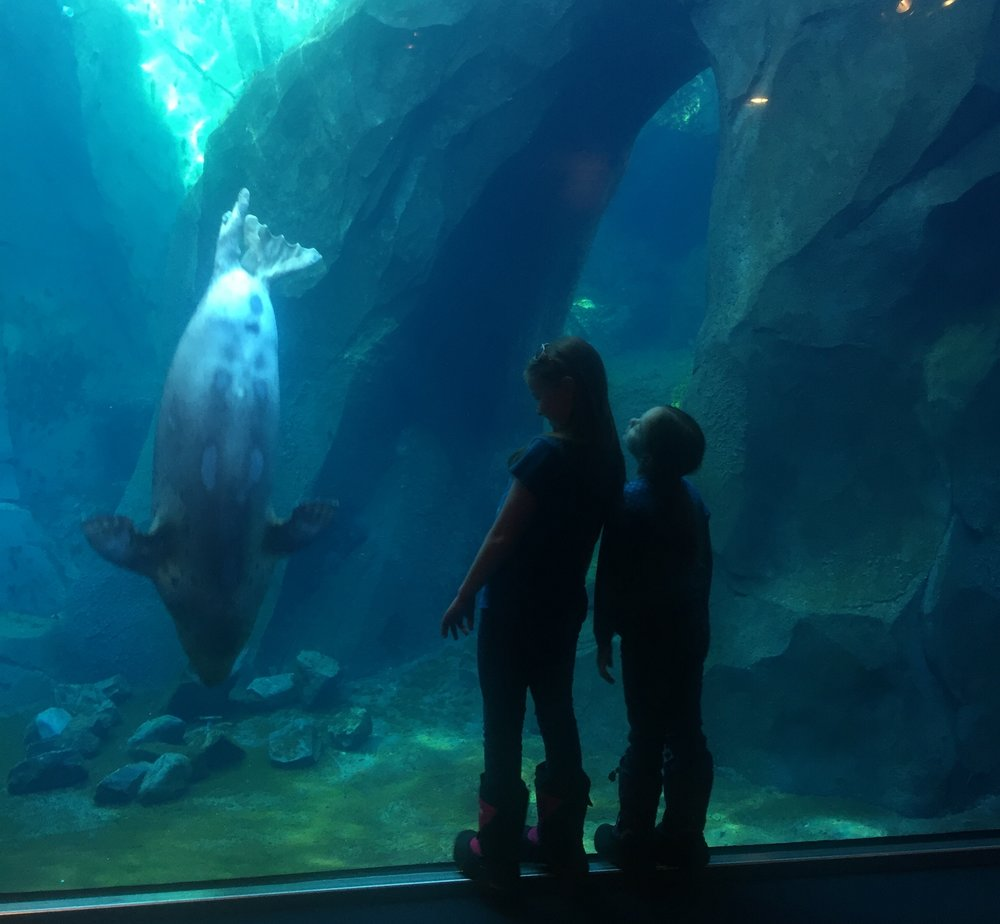 alaska sealife center sewardhttp://alaskasealife.org/