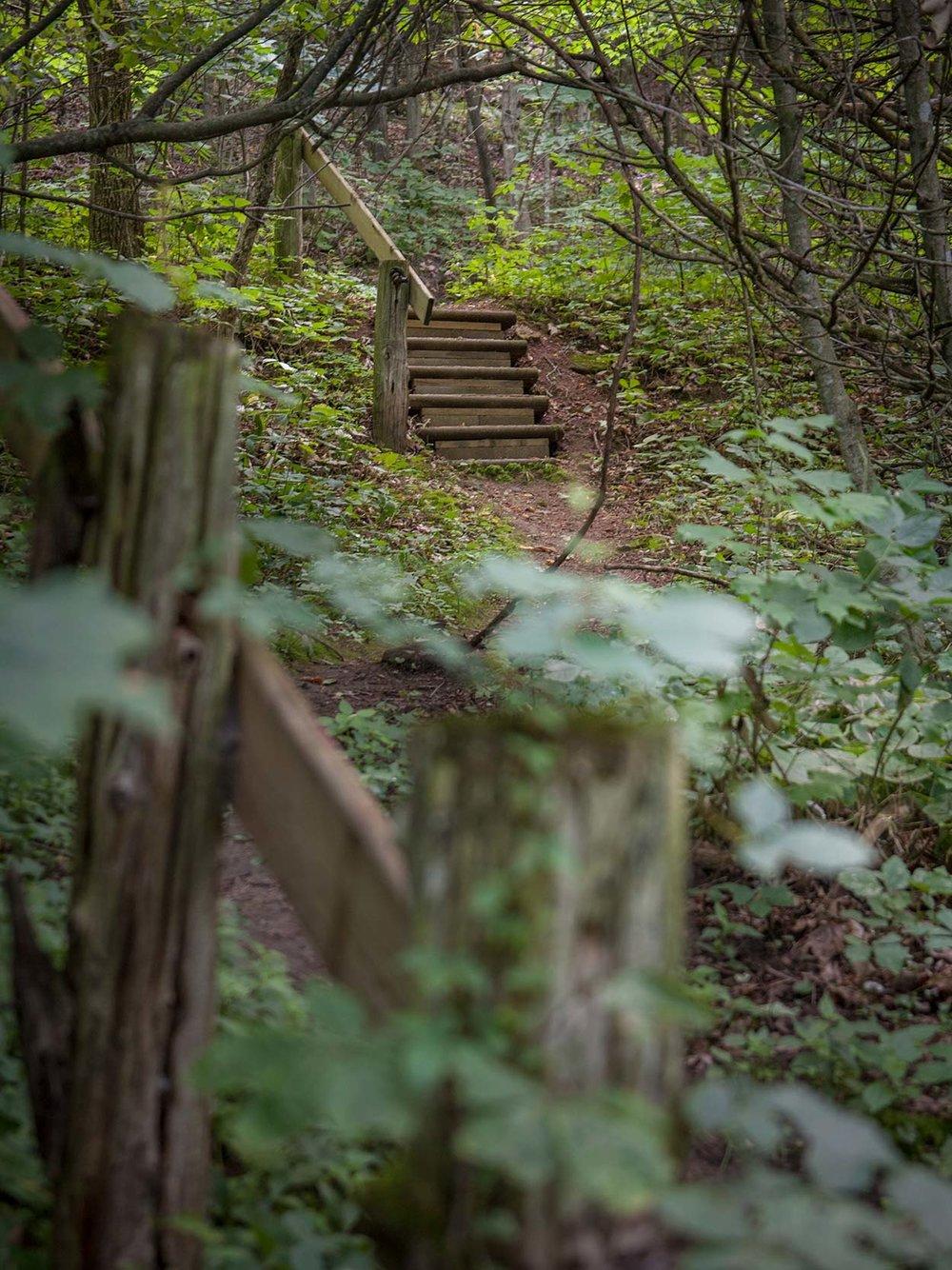 path_steps.jpg