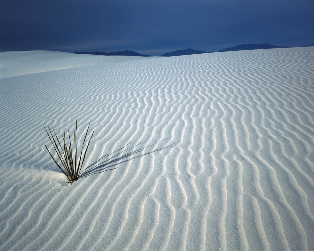 WHITE SANDS MORNING
