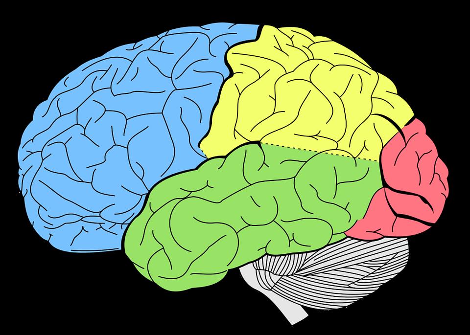 brain-1007686_960_720.png