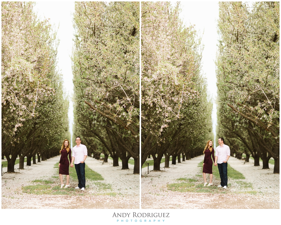 Bride and Groom in Almond Orchard