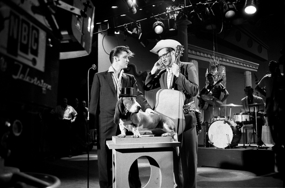 "Following Elvis's hip-thrusting performance of ""Hound Dog"" on <i>The Milton Berle Show</i>, Steve Allen sets the tone by asking Elvis to sing to a live basset hound."