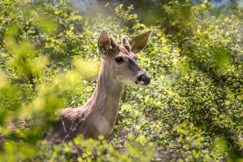 Okanagan fb-8868.jpg