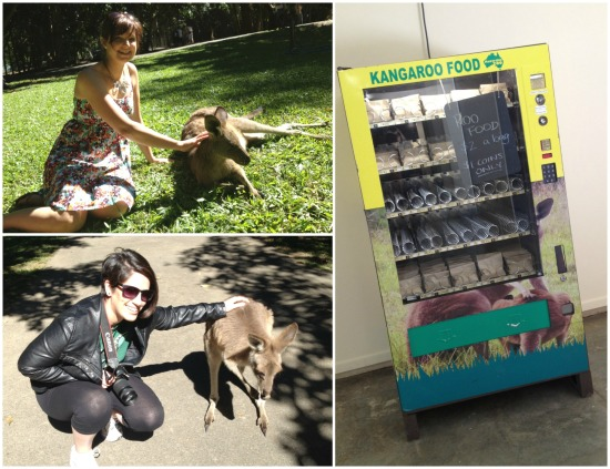 Stroking kangaroos in Roo Heaven and the 'Roo Food' vending machine.