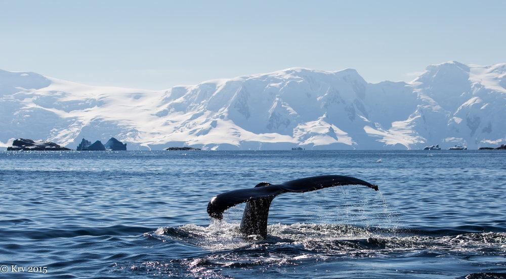 Whale 37.jpg