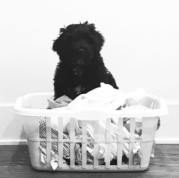 Migo The Dog Friend