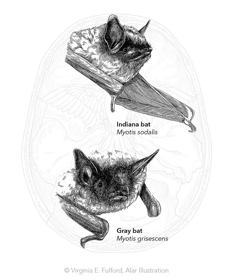bats_1.jpg