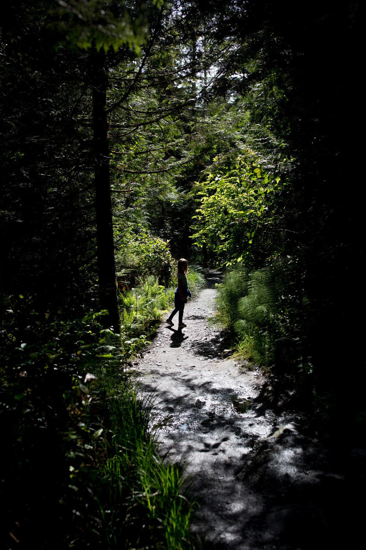 nature walk silhouette