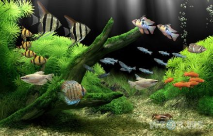 Aquariums can contribute to mold issues. -