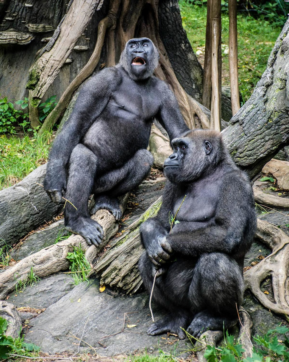Bronx Zoo 2014 (30 of 50).jpg