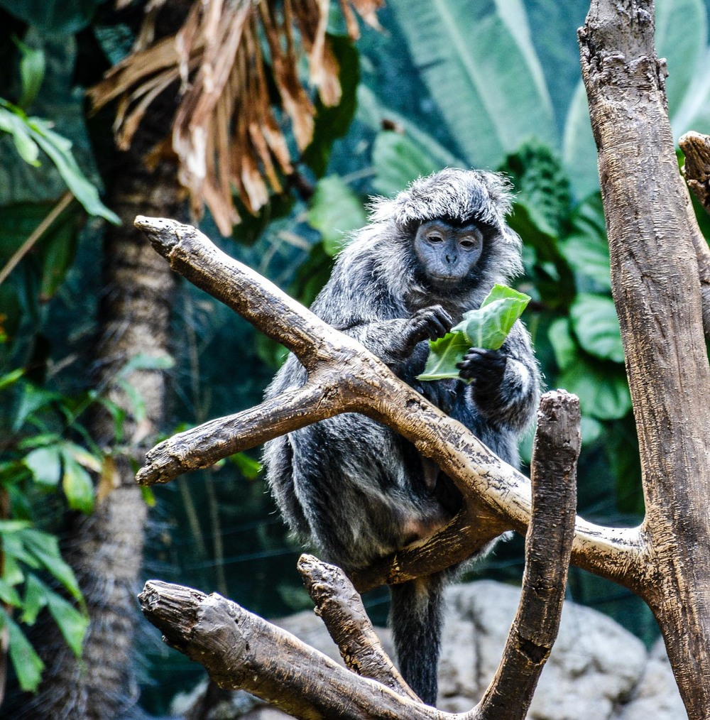 Bronx Zoo2 2014 (24 of 68).jpg