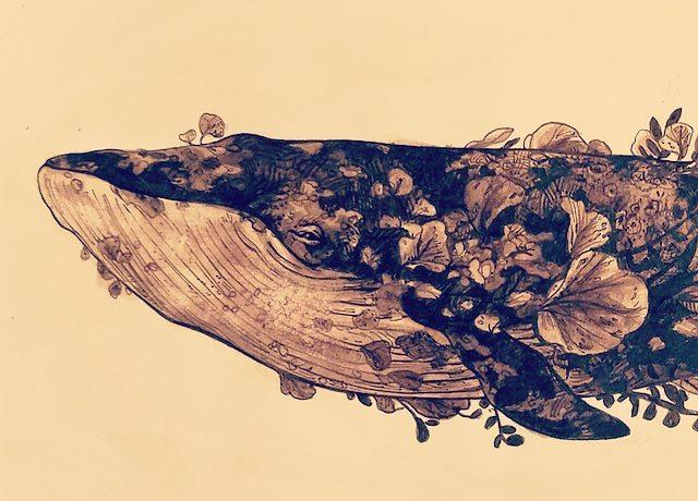 Ok Inktober is really kicking my butt #inktober #inktober2017 #whale #bluewhale #underwater #creature #animals #nature #pen #ink #고래 #동물 #그림 #미술 #일러스트 #dessin #encre #art #traditional #illustration #artistsoninstagram #illustration_daily