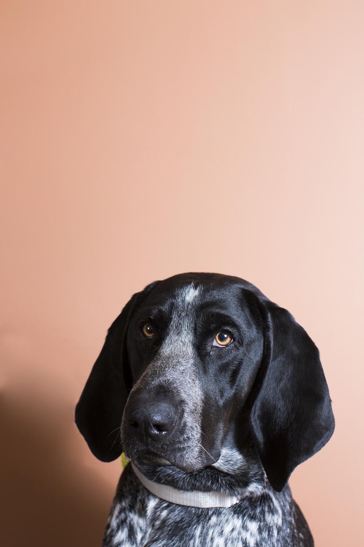 46 Mixed breed dog studio pet photography session warm orange background.jpg