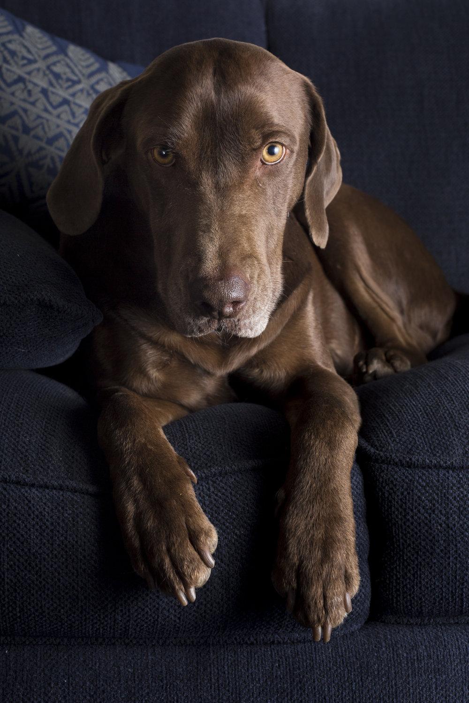 uncle_buck_dog-1513.jpg