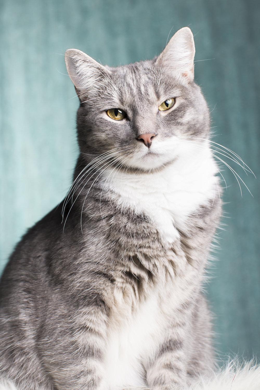 studio cat pet photography 327.jpg
