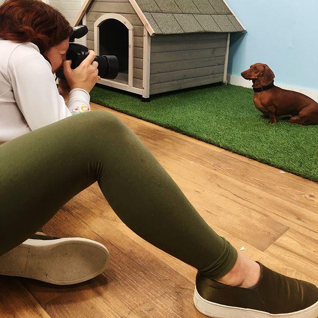 My favorite thing to photograph. #dogphotographer #commercialdogphotography #dogsonset #poochportraits #profoto #profotod2 #bluprint #bestkindaworkday #lovemyjob