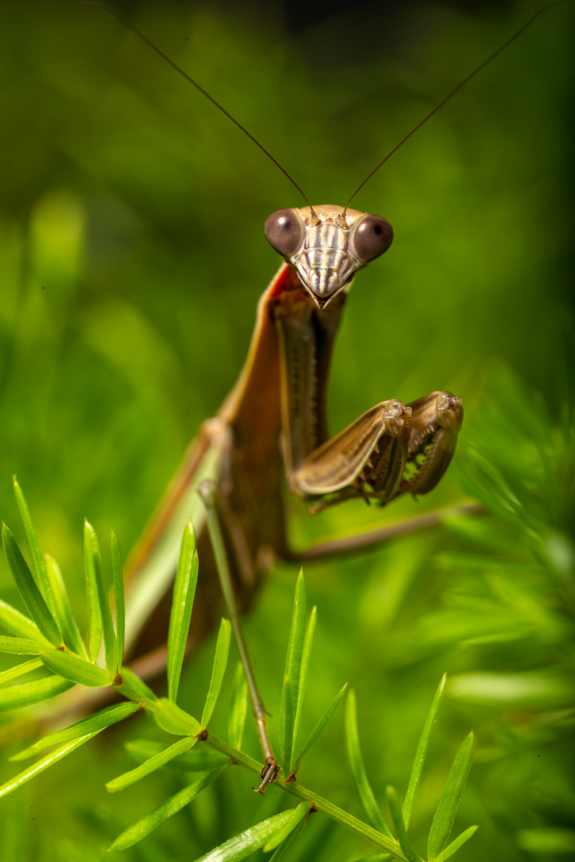 cp mantis web-1.jpg
