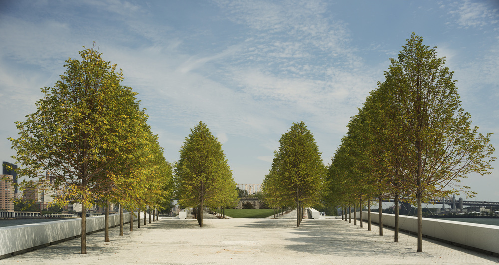 Park Linden trees on a warm spring day. In the center is the top of a Copper Beach tree. © Paul Warchol