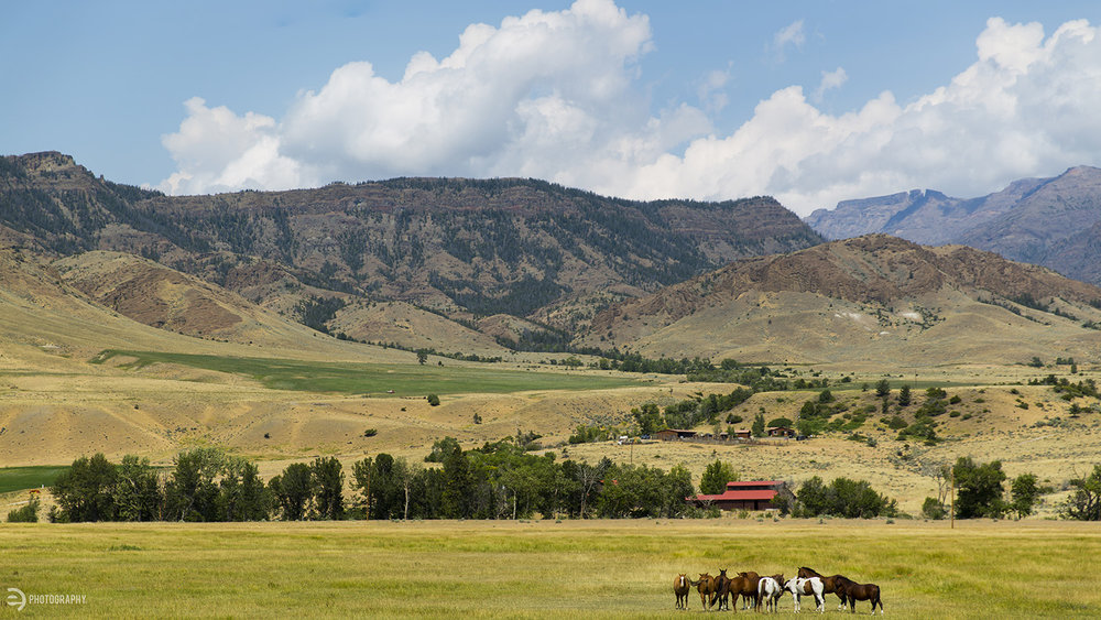 This ranch is just off the road between Cody, WY and Yellowstone. Open pasture, horses, mountains and blue skies - ahhhhh... Wyoming!
