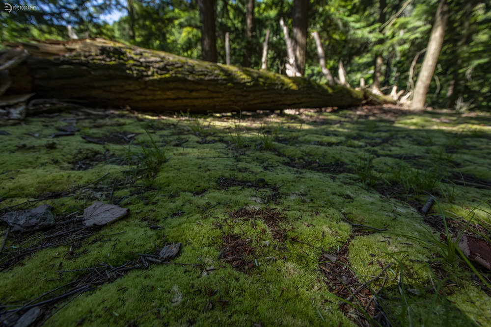 There were several fallen trees in the area - most in soggy moss, which caught my attention due to the awesome texture.