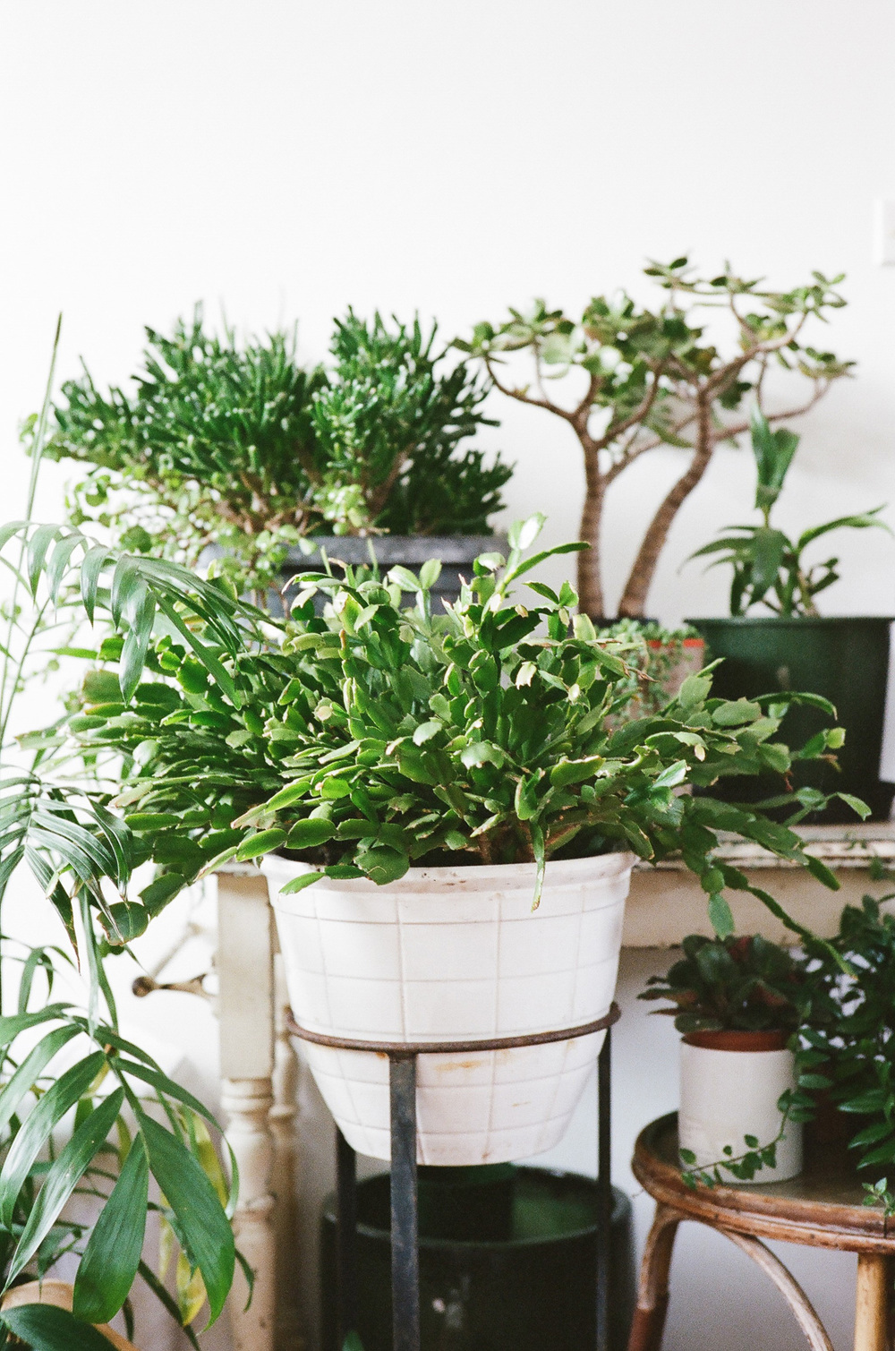 OliveandOak_NgaioParr_ElizeStrydom_IndoorPlants_Home