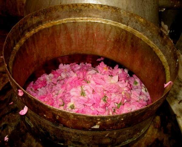 Rose Water Distillation | photo source unknown